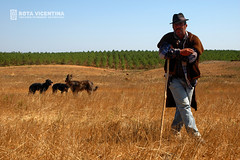 the Shepherd and his dogs Photo