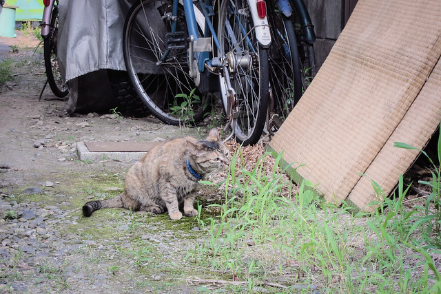 Today's Cat@2012-06-08