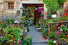 Il fioraio del paese - The village florist (Ola55) Tags: flowers italy colours florist fiori colori umbria italians spina fioraio mywinners aplusphoto worldtrekker ola55