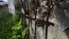 Rust (NockOffProductions) Tags: plant rock wall fence rust