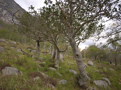 landscape scotland highlands argyll glen glencoe coe