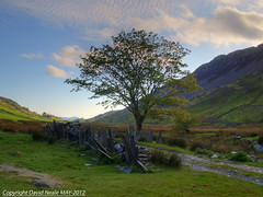 Lonesome Tree - Croesor Valley (Daveyboy_75) Tags: mountains tree olympus snowdonia hdr porthmadog cnicht cambrianmountains e420 croesor lonesometree welshmatterhorn croesorvalley afoncroesor