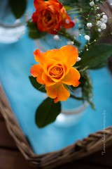 rose-9538 (Laura Adani) Tags: flower green nature leaves rose garden spring basket natural jar orangecolour