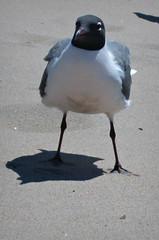"""Hey,this is a birds only area buddy"" (Robert S. Photography) Tags: colour bird beach brooklyn pose coneyisland sand canonpowershot 2014 a3400"