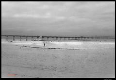 Around San Diego: Early Morning Life (rmc sutton) Tags: ocean blackandwhite bw pier pacificocean oceanbeach ob oceanbeachpier