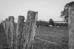 Zaun / Fence (s.knellesen) Tags: old bw fence alt structures sw zaun strukturen knellesen