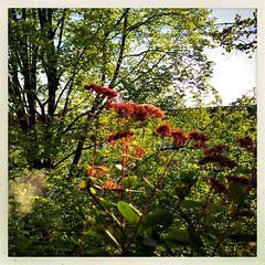 Abundance Of Springtime (Eva Biskup) Tags: trees green nature spring hamburg lush abundance iphone iphoneography hipstamatic evabiskup