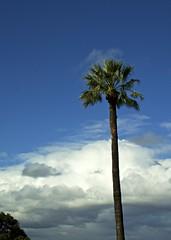 Palm (Padmacara) Tags: sky cloud australia palm perth kingspark shadowlight d7100 nikkor18140