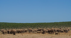 Suedafrika-62 (Lukas P Schmidt) Tags: elephant addo nationalpark elephantpark