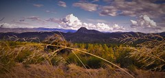 Mountain Views (sirenscotland) Tags: trees arizona sky mountains nature grass clouds forest twilight windy