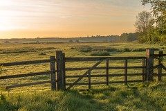Stunning light over the Bedfordshire countryside (richardpuncheon) Tags: trees sunrise countryside gate bedfordshire colourful morningdew softlight woburn