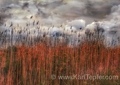 Cloudy day today....shot from Tobay BeachSeagrass and Clouds: 5/24/16(iPhone6s+ Snapseed, Karl Tepfer)#Cloudporn, #Sunset, #TobayBeach #Clouds, #Seagrass, #Ominous,  #KarlTepfer.com, #Tepfer, #KarlTepfer, #iPhonography, #ig, #instagram (Karl Tepfer) Tags: sky clouds ominous cloudporn tepfer tobaybeach karltepfer karltepfercom