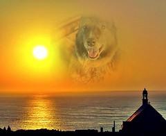 Sunny Shizandra (Jo-Cooler Than Usual Summer...Yay!!!!!) Tags: sunset dog sun house water animal yellow tongue photoshop coast silhouettes sunny panting ddc 1670 shimmer photofacefun shizandra