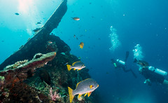 Liberty Wreck, Bali (Corey Hamilton) Tags: travel bali liberty underwater shipwreck tulamben