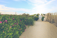 Beach Entrance (elizthomasphoto) Tags: ocean travel beach sand massachusetts sandwich atlantic coastal cape cod