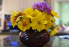 Flowers from the garden! (ineedathis,The older I get the more fun I have....) Tags: flowers art southamerica colors yellow blossoms daisy vase bouquet amethyst collectible gaillardia asteraceae perennial blanketflower coreopsis pierisrapae tickseed butterflygarden catchfly artogeiarapae wildflowergarden silenearmeria nikond750