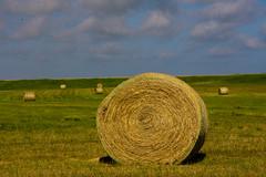 Unrolling (TPorter2006) Tags: wallpaper june texas grain harvest xp hay bales hillsboro 310 2016 aquilla tporter2006