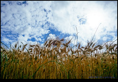 160615-8287-XM1.jpg (hopeless128) Tags: wheat france sky eurotrip 2016 fields clouds nanteuilenvalle aquitainelimousinpoitoucharen aquitainelimousinpoitoucharentes fr