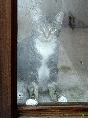 I want to come outside too! (sole.r) Tags: usa newyork cute rain cat kitten adorable gatto bosco easthampton