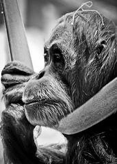 365-83 (Photo Holica) Tags: street camera light portrait people bw white black art digital canon photo blackwhite focus photographer emotion photos expression ape animale