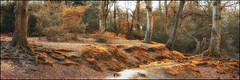 Eylsian Forest (simonjchristopher) Tags: wood trees tree forest woodland landscape woods newforest treescape burley enchanted copse