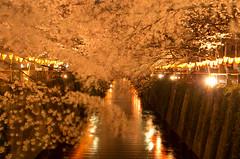 sakura roof and lanterns' lights (gemapozo) Tags: japan night cherry tokyo pentax sakura megurogawa k5 夜桜 someiyoshino 目黒川 smcpfa31mmf18