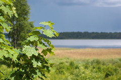 The Sun And The Rainfall, Continued (lemmingby) Tags: sun lake green leaves weather travels trips belarus roseta braslav otherwheres braslavlakes rosetamansion drivyaty
