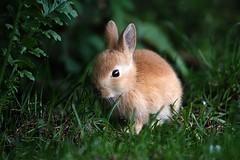IMG_8077  web (Simon186) Tags: wild rabbits