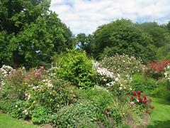 Heritage Rose Garden - Hagley Park