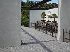 (Mel R) Tags: plants nature botanical arboretum bonsai botanic botany penjing