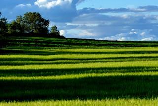 castilian landscape #13