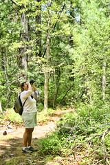 IMG_4070 (ReneeGannon) Tags: ocean trees macro nature sunshine birds creek landscape hawk falcon marshfield floweres massaudubon
