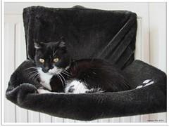 Miezi und ihr fliegender Stuhl - Miezi and her flying chair!