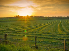 Sunset swaths (Alan10eden) Tags: ireland sunset field grass canon landscape cut farm lensflare milford 1770 silage ulster forage armagh swaths 60d