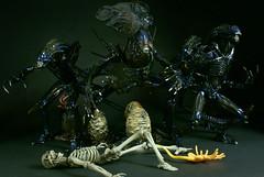 Alien Hive (Jii Dee) Tags: skeleton alien queen warrior kaiyodo revoltech