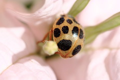 beetle & flower (CamiSilver) Tags: life macro nature insect colombia beetle tropic insecto challengeyouwinner cucarron
