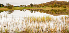 Reflections (amcgdesigns) Tags: autumn trees colour reflection water canon reflections reeds landscape eos highlands october colours calming calm loch distance atmospheric speyside lochan cs4 eos7d lagganside andrewmcgavin andrewmcgavin