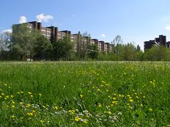 Spring in the neighborhood (Daisuke Ido) Tags: flowers primavera spring day lawn clear bologna fiori condos prato condominiums condomini