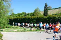 halbmarathon (dmytrok) Tags: germany deutschland garten hn heilbronn badenwrttemberg flein weinberge