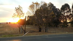 Sun setting over pasture land - Forest Hill NSW - April 2016 (nicephotog) Tags: sunset animal rural cow scenery cattle sundown dusk farm country australia pasture nsw land outback steer pastoral grazing paddock