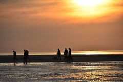 Sunset in Zeeland (jacques_teller) Tags: friends sunset sky beach dogs backlight reflections walking landscape sand nikon silhouettes zeeland human polder dutchcoast