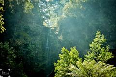 Lorne , Eskrine Falls - Great Ocean Road (jessevine1990) Tags: lorne victoria eskrine falls greatoceanroad waterfall