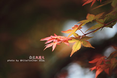 - (Whitefox Chen) Tags: tree canon spring taiwan taipei      6d      canon70300mm