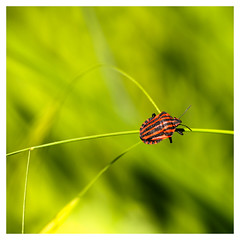 acrobatie (objet introuvable) Tags: light red macro green nature canon garden rouge bokeh lumire jardin insects vert cadre insectes canon70d