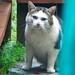 Rhodie with his nose still healing 14_12_9 DSC_0279