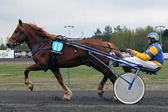 IMG_2212 (lovelymelancholy) Tags: horses horse hevoset hevonen horseraces ravit imrautio ravihevonen