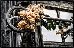 Flower meets Metal (ammozug) Tags: flower window wheel metal detroit belleisle annascrippsconservatory