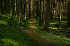Emerald green (poach01) Tags: trees light green grass forest moss woods path dappled emerald leading emeraldgreen