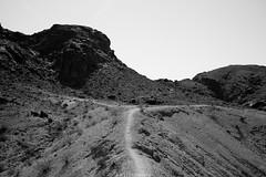 5R6K2604 (ATeshima) Tags: arizona nature havasu