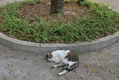 160608 - Arc (y_leong23) Tags: cat dlux